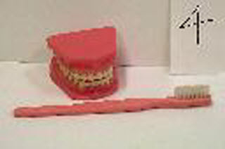 pciture of large mouth and toothbrush model