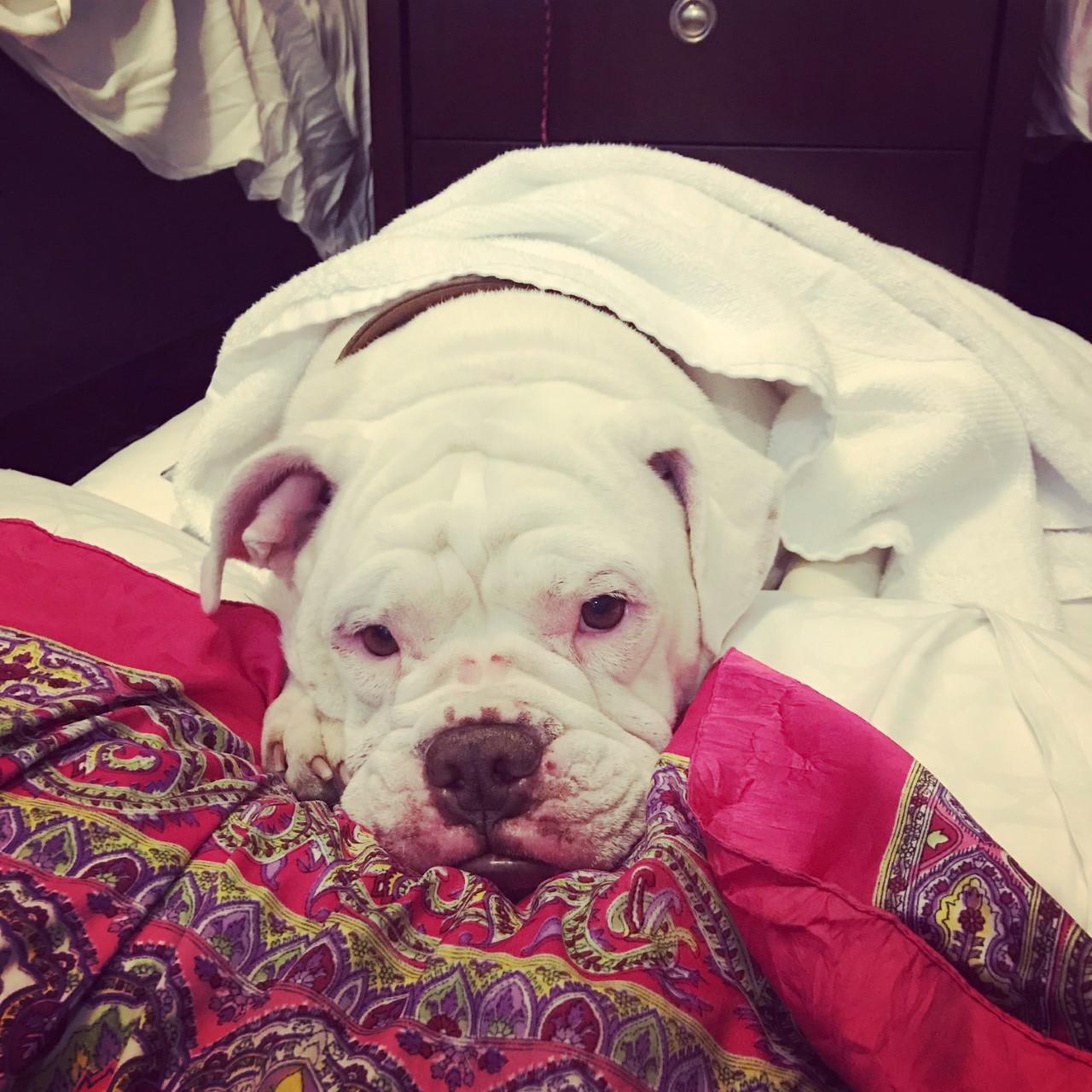 Ashley Boss's pet dog