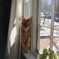 Emily Bruey's cat