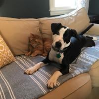 Emily Bruey's pets