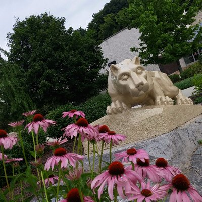 The Lion Shrine (statue of the nittany lion) in front of Thun Library.  Purples flowers and trees around the lion.