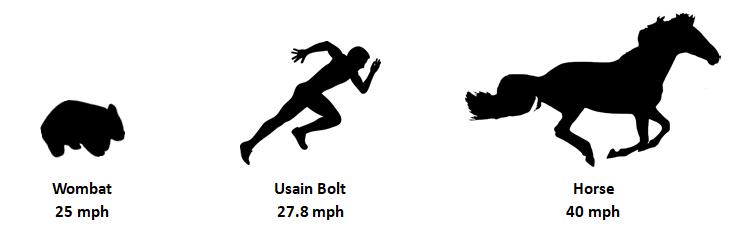 Wombat running at 25 mph, Usain Bolt running at 27.8 mph, and a horse running at 40 mph