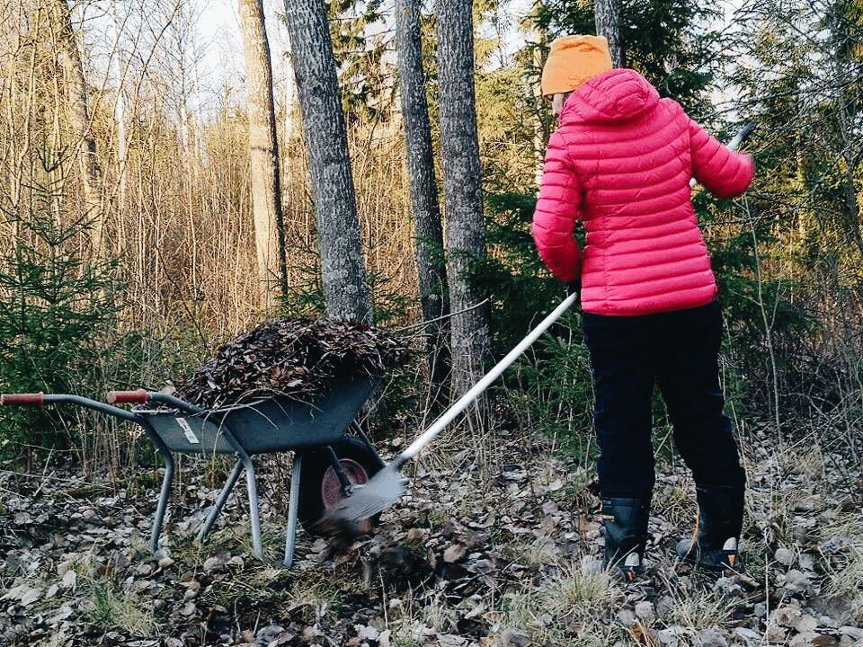 A Finnish Woman Raking the Forest Floor (in jest)