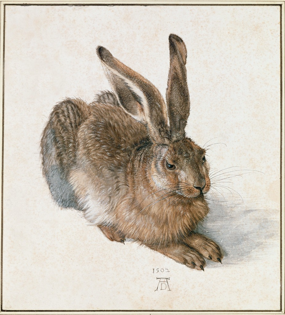 painting named hare by albrecht durer