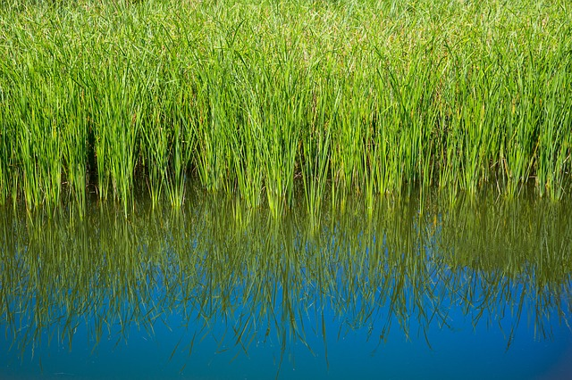 Seacoast Marsh
