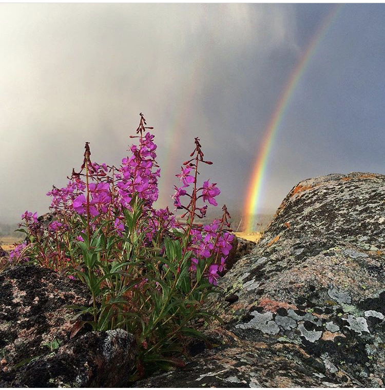 wild flowers next to rocks and a rainbow