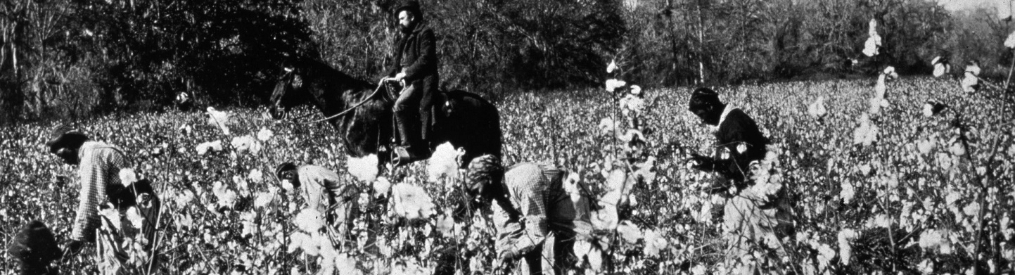 Slaves picking cotton in a field in 1850, with an overseer on horseback