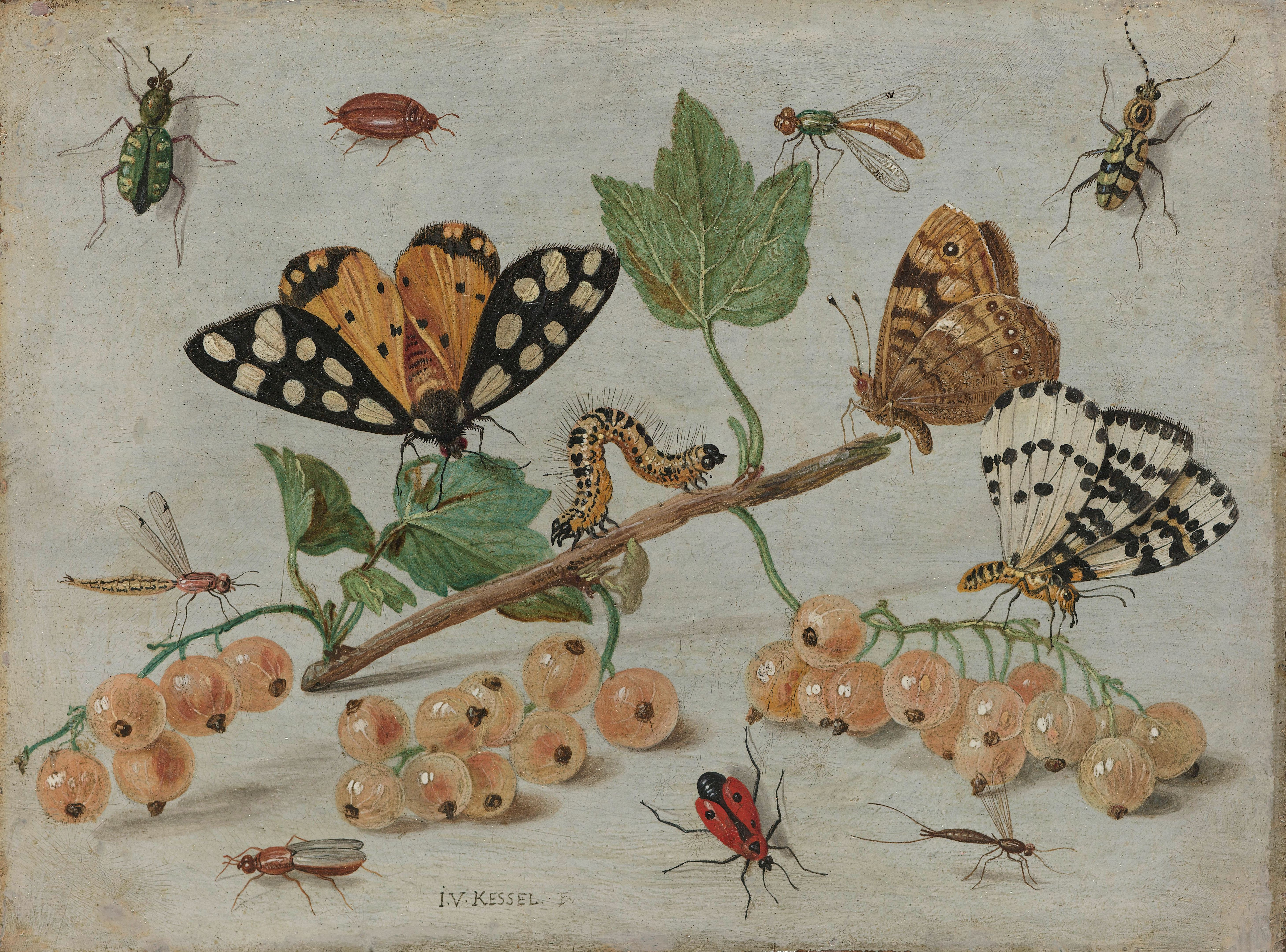 Illustration of insects and fruit