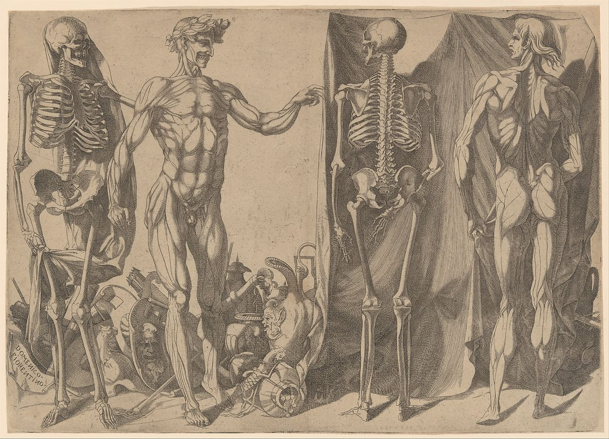 Two Flayed Men and Their Skeletons ca. 1540–45 Domenico del Barbiere Italian