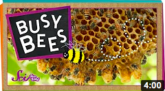 Busy Bees video