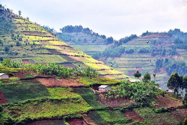 view of hilly Ugandan landscape covered with farm fields, with a small home and a few trees visible