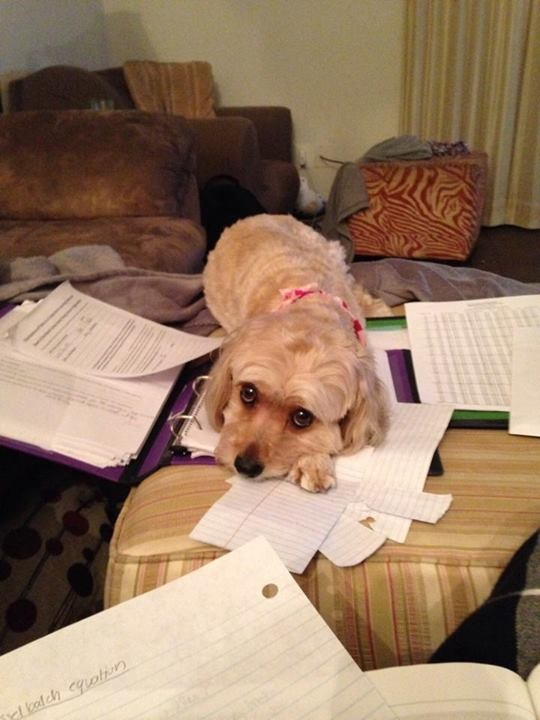 sad dog lying on notebook and papers