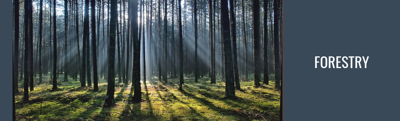 photo of a forest with sun shining through trees