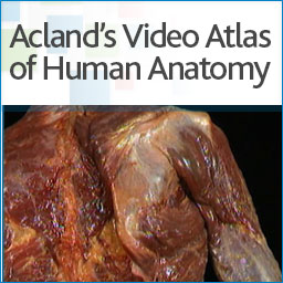 Aclands anatomy button