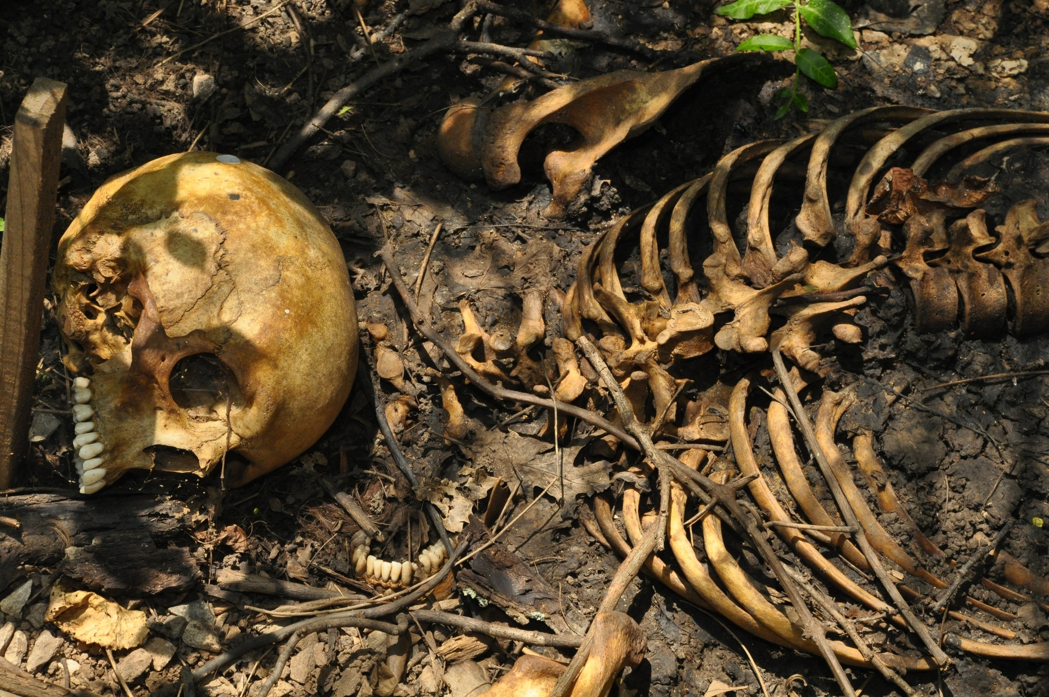 human remains at the Body Farm in Knoxville Tennessee