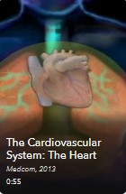 AVON - The Cardiovascular System