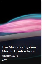 AVON - Muscle System-Contractions