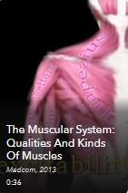 AVON - Muscular System - Qualities