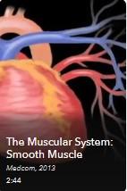 AVON - Muscular System-Smooth