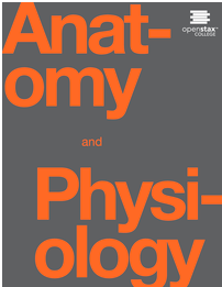 Anatomy and Physiology  [cover image]