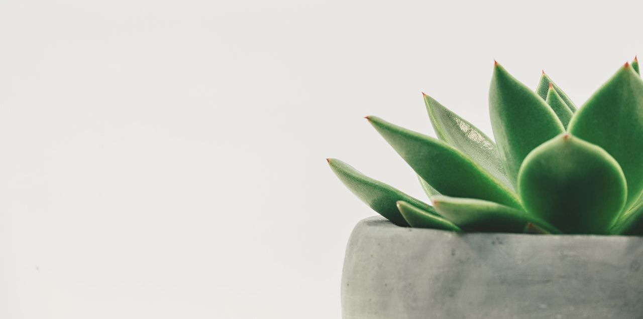 Succulent plant against a white background; text reads Teaching & Learning Center, Kishwaukee College