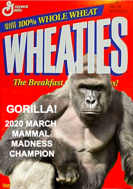 Wheaties box with a gorilla on it