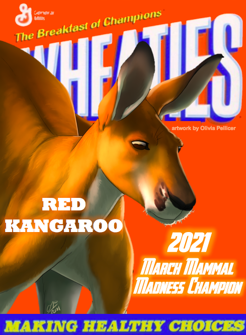 Wheaties Box with picture of #2021MMM Champion Red Kangaroo