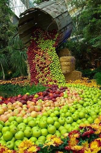 A path covered with well aligned green, yellow and red apples flowing out of a basket
