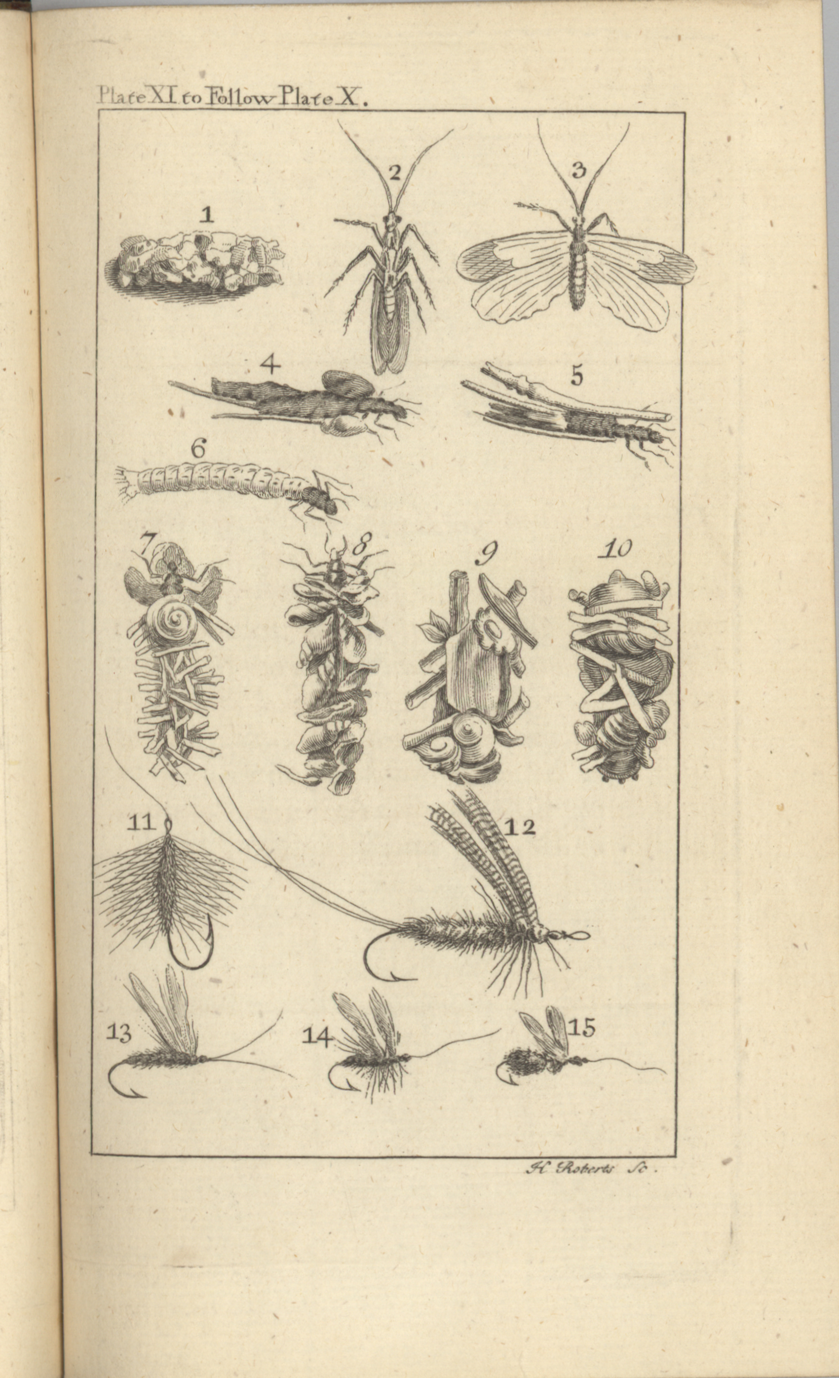1760 Diagrams of Flies