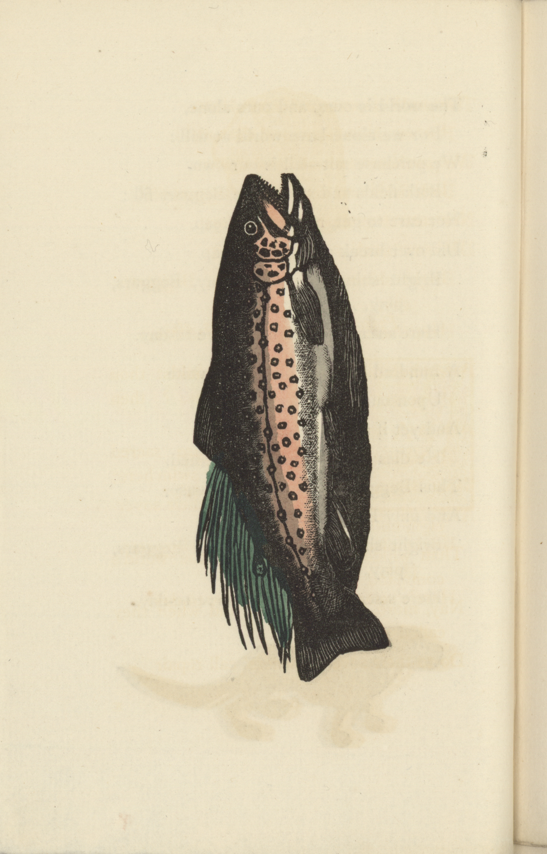 1855 Woodcut of a Fish