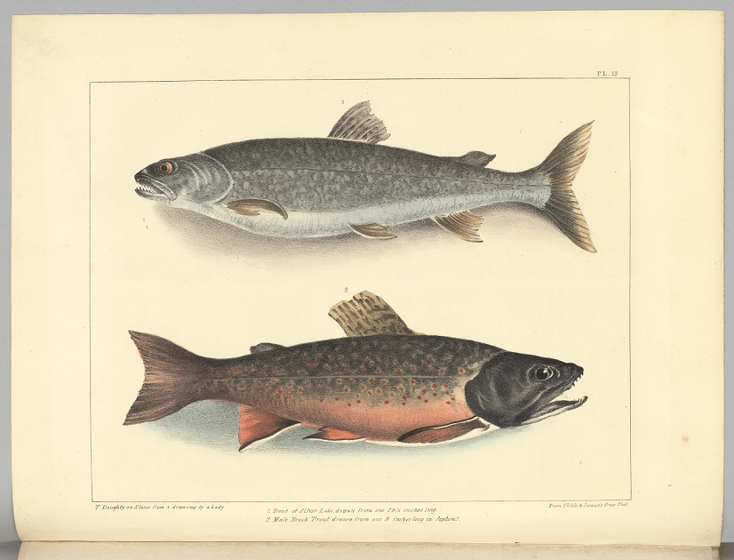 Thomas Doughty lithograph of two fish