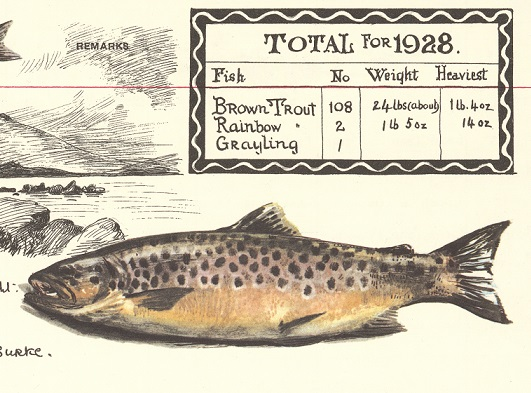 Illustration of trout