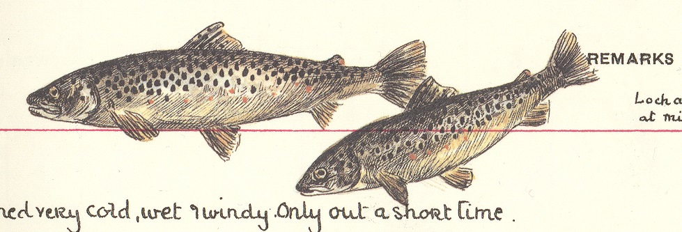 Illustration of two trout