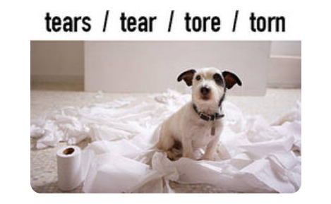 picture of a dog with tears tear tore torn