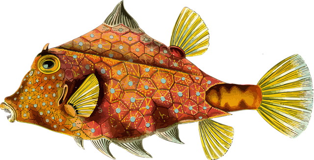 Picture of fish