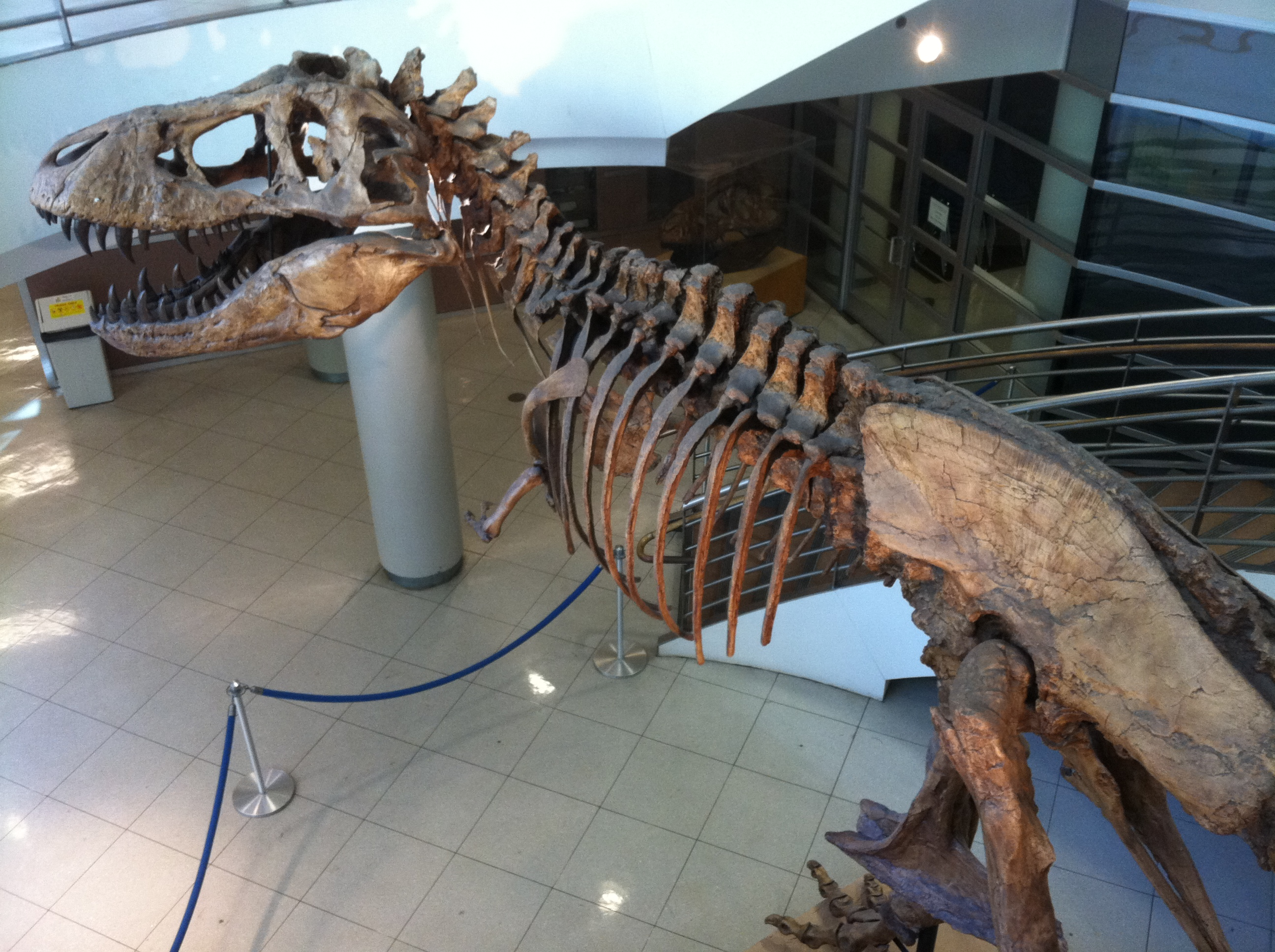 Dinosaur in lobby of Valley Life Sciences Building; click for library home page