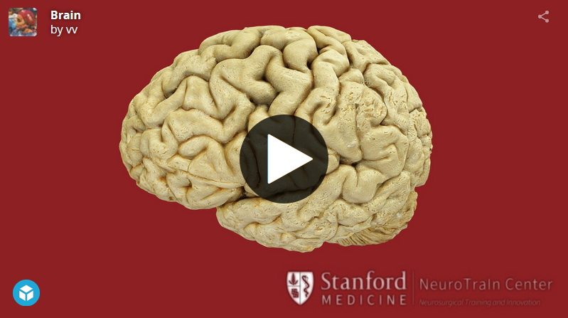 Stanford Interactive 3D Simulation - Anatomy of the Brain