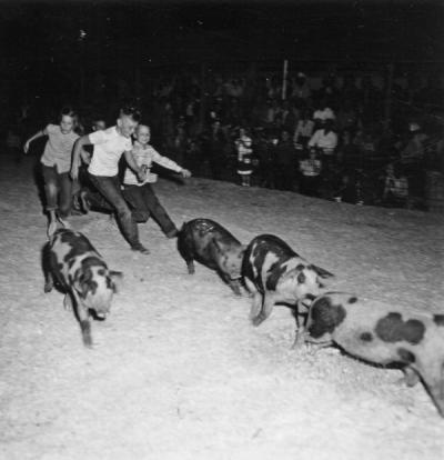 4-H pig scramble, Morrow County, 1953