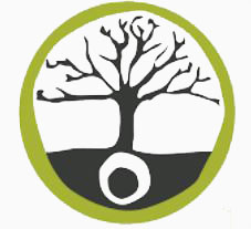 seed to tree graphic