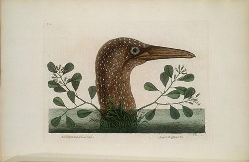 Bird head in profile
