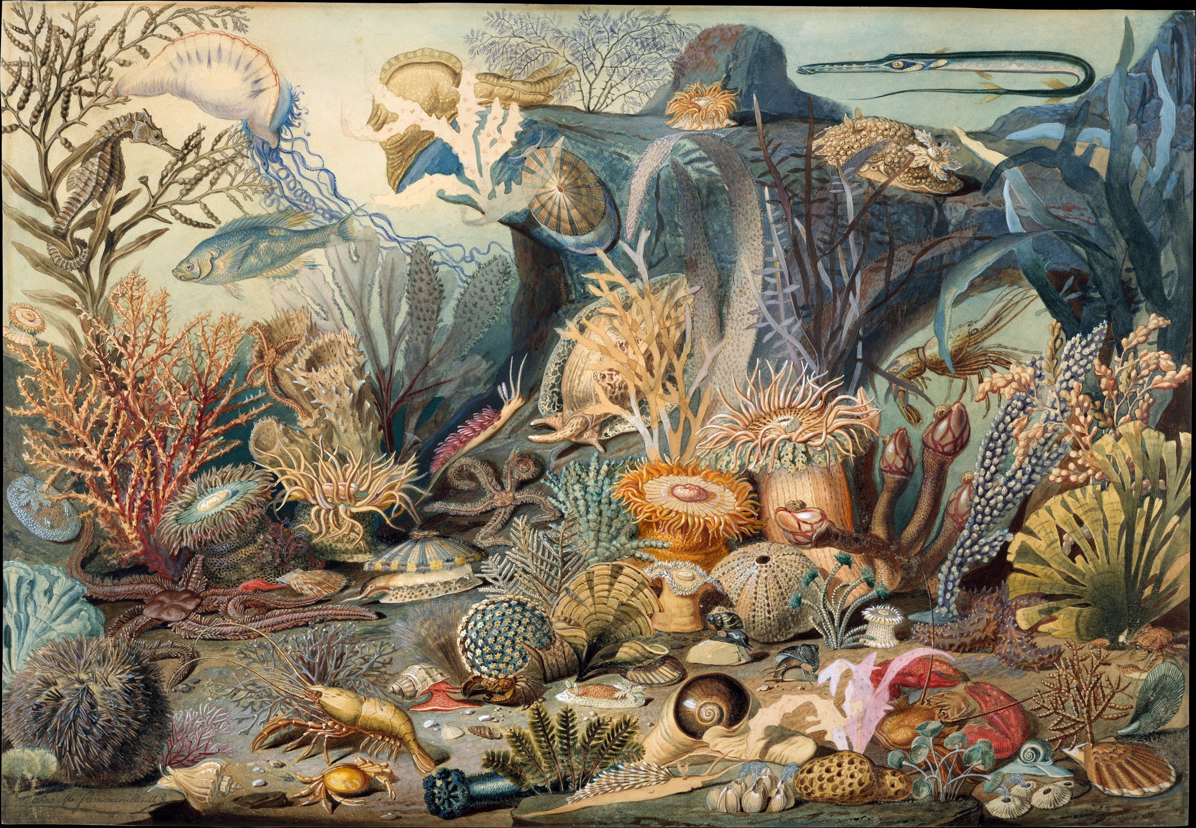 19th century natural history illustration of ocean life