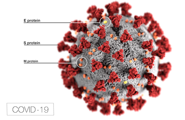 Depiction of the Coronavirus (COVID 19) with labeled E, S, and M proteins.