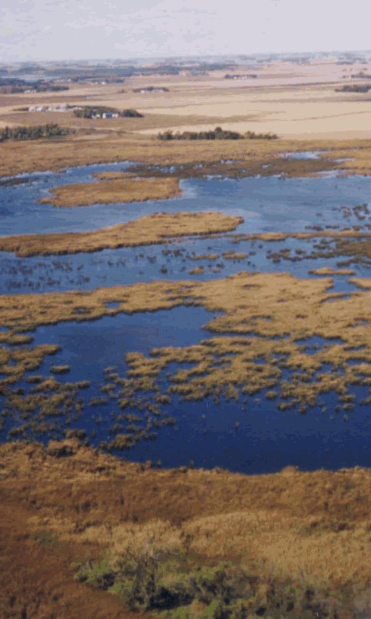 Swan Lake Minnesota wetlands complex