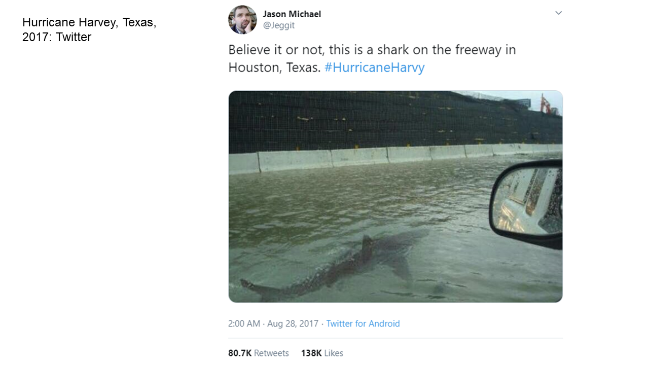 This is a screenshot of a Tweet from Aug. 2017. It appears to be taken from a car window on a flooded highway, and depicts a shark swimming nearby in the floodwater. Above the image are the words