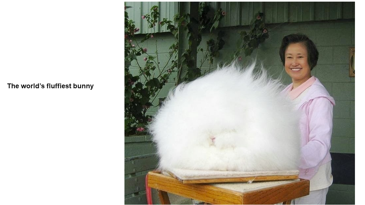 This is a photo of a smiling woman standing next to a very large soft-looking poofy animal with white fur, and the image is titled