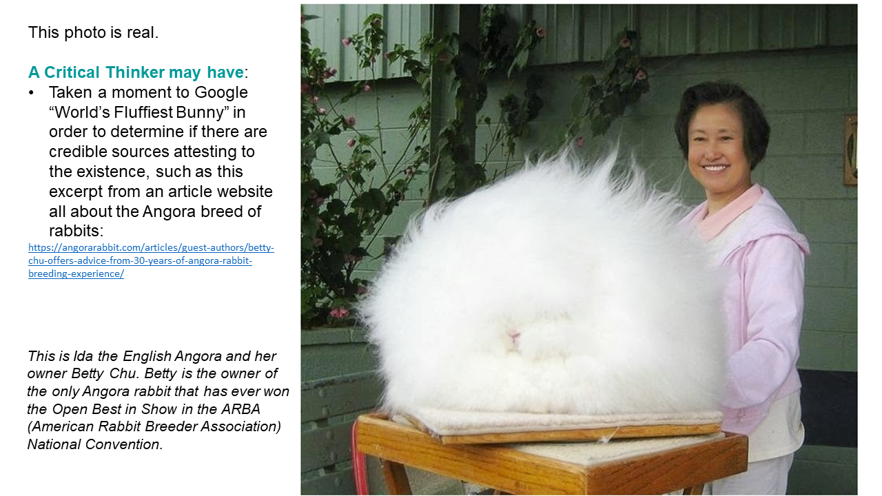 """This photo is the same one as the previous image, and it is real. This is Ida the English Angora and her owner Betty Chu. Betty is the owner of the only Angora rabbit that has ever won the Open Best in Showin the ARBA (American Rabbit Breeder Association) National Convention.   A Critical Thinker may have: Taken a moment to Google """"World's Fluffiest Bunny"""" in order to determine if there are credible sources attesting to the existence, such as this excerpt from an article website all about the Angora breed of rabbits: https://angorarabbit.com/articles/guest-authors/betty-chu-offers-advice-from-30-years-of-angora-rabbit-breeding-experience/"""