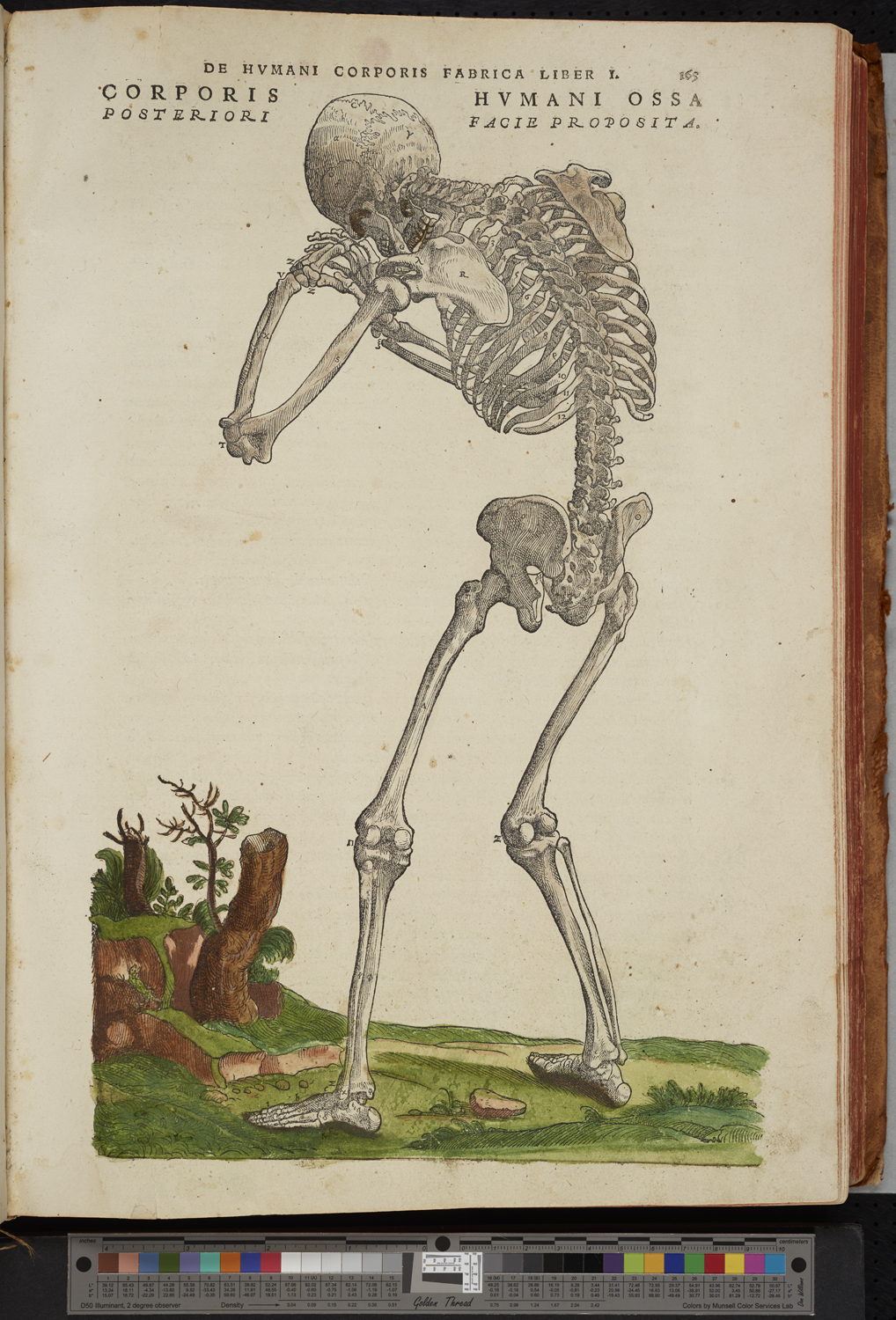 Third Skeletal Man