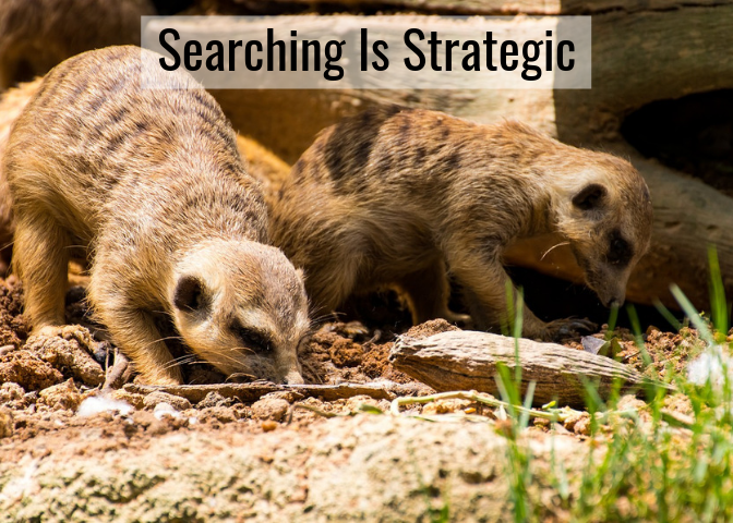 Two meerkats looking for something with heads close to the ground and text
