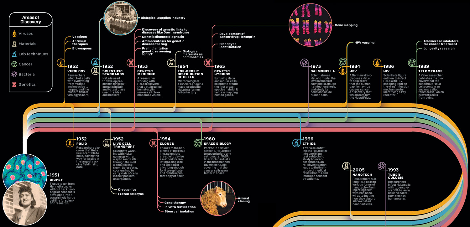 info graphic of the use of HeLa cells through time