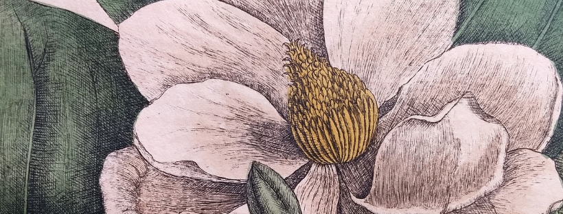 Detail of Magnolia flore albo from Mark Catesby's Natural History of Carolina, Florida and the Bahama Islands.